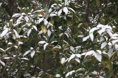 Snow. Fall in texas fort worth Royalty Free Stock Images