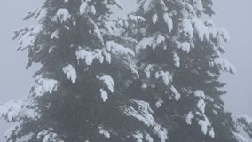 Snow snowing covered on alpine tree at top of mountain stock video