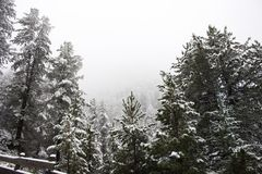 Snow snowing covered on alpine tree at top of mountain Stock Image