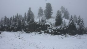 Snow snowing covered on alpine tree at top of mountain stock footage