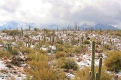 Snow in the Sonoran Desert. A snowy landscape in the Sonoran Desert with cacti and mountains near Phoenix, Arizona stock photos