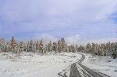 snow spårar däck Arkivfoto