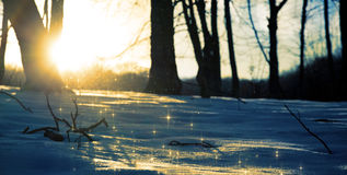 Snow sparkling in the rays of the setting sun Stock Photography