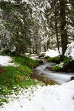 Snow at spring season. Near a river in a french forest. Long exposure Royalty Free Stock Image