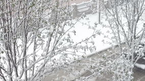 Snow in spring.Snow falls on the street trees in green foliage and blooming. Snow in spring.Blizzard in the spring. Strong snow falls on the street trees in stock video