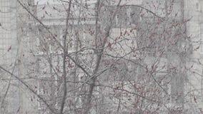 Snow spring urban scene stock video