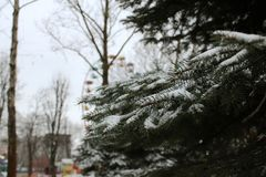 Fir branches on the background of children`s attractions royalty free stock photos