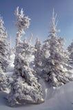 Snow spruces landscape Stock Photos