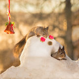 Snow squirrels home Royalty Free Stock Photos