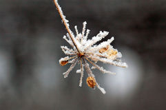 Snow star Royalty Free Stock Photography