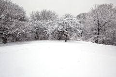 Snow storm Royalty Free Stock Photos