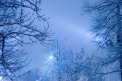 Snow storm Royalty Free Stock Images