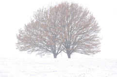 Snow storm Stock Photos