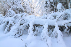 After snow storm. Cross country trail closed after a snow storm damage Stock Images