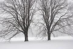 Snow storm Stock Image