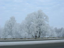 Snow storm. On a winter road Royalty Free Stock Photography