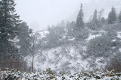 Snow storm in the Alps Royalty Free Stock Photos