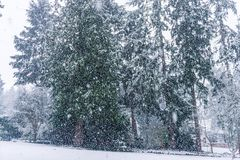 Snow Storm In Burien 2. A snow storm begins in Burien, Washington royalty free stock image