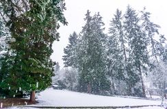 Snow Storm In Burien 3. A snow storm begins in Burien, Washington royalty free stock photography