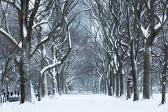 Snow Storm Royalty Free Stock Photography