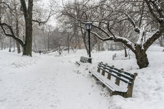 Snow storm in Central park Royalty Free Stock Photography