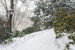 Snow storm in Central park Royalty Free Stock Images