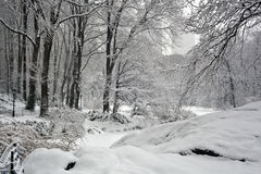 Snow storm, Central Park NYC Stock Image