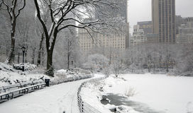 Snow storm, Central Park NYC Stock Images