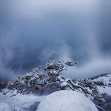 Snow storm at Demerdzhi mountain Royalty Free Stock Images