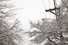 Snow storm, electrical cables and trees Royalty Free Stock Image
