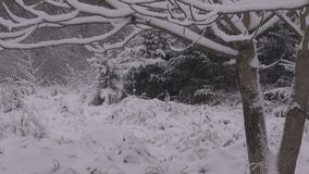 Snow storm by the forest stock video footage