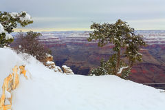Snow Storm in Grand Canyon, AZ Stock Photography