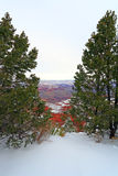 Snow Storm in Grand Canyon Forest, AZ Royalty Free Stock Images