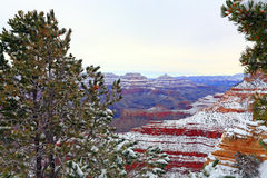 Snow Storm in Grand Canyon Forest, AZ Stock Photo