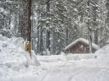 Snow Storm Stock Photography