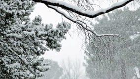 Snow storm stock footage