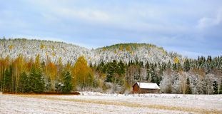 Snow storm mountain autumn tree color Royalty Free Stock Image
