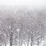 Snow storm over forest in winter Stock Photography