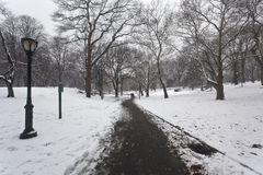 Snow storm in the park Royalty Free Stock Image