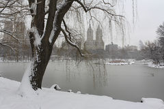 Snow storm in the park Royalty Free Stock Photo