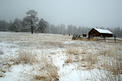 Snow storm on the ranch Colorado Stock Photo