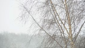 Snow storm. The birch bends under a strong wind stock video footage
