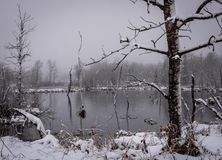 Snow storm in wetlands pond, snow blowing across camera tree in pond royalty free stock image