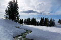 Snow stream. Stream covered with green grass in snow field Stock Photo