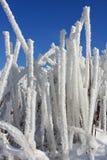 snow subtilis Arkivbilder