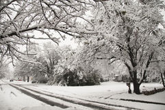 Snow in  the Suburbs. Tree lined street and trees covered with heavy snow Royalty Free Stock Image