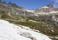 Snow In Summer Royalty Free Stock Photography