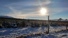 Snow and Sun beyond the Fence Royalty Free Stock Photo