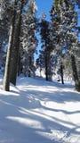 Snow. Sun, holiday, bayern Stock Photo