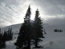 Snow, sun and trees Royalty Free Stock Image
